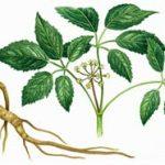 خواص درمانی گیاه جینسنگ