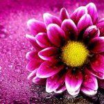 تعبیر خواب گل + تعبیر خواب گل رنگی و تعبیر خواب گل مصنوعی