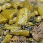 خورش کرفس با آلو بدون گوشت + طرز تهیه خورش کرفس با مرغ