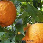 خواص نارنج و عسل در لاغری + خواص نارنج برای موی سر