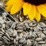 خواص تخمه آفتابگردان بوداده برای پوست + خواص تخمه آفتابگردان در لاغری