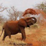 عکس از فیل و تصاویر بچه فیل های بامزه