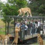 عجیب ترین و متفاوت ترین عکس باغ وحش در دنیا