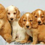 عکس از سگ ها و جالب ترین نژادهای سگ در دنیا