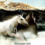 زیباترین عکس از اسب ها و دیدنی ترین اسب های اصیل