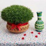 کاشت عدس برای سبزه عید در گلدان به همراه عکس های سفره هفت سین
