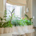 گیاهان آپارتمانی خواب آور و آرامش بخش