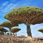 عجیب ترین ها و شگفت انگیزترین درخت های دنیا